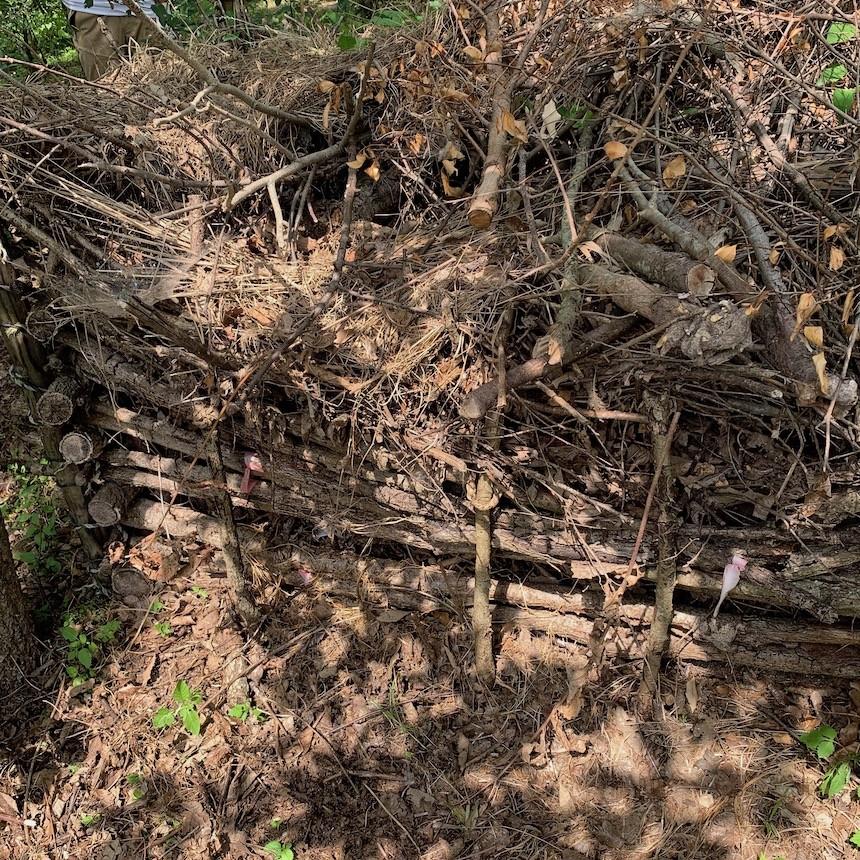 長久手の森プロジェクト2