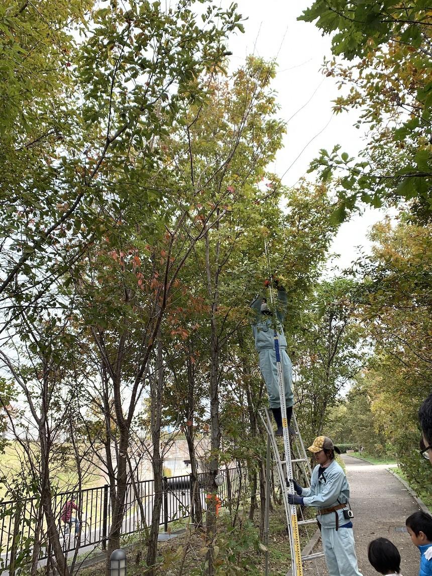 長久手の森(モリコロパーク)の成長記録